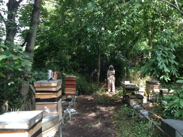 Jonesie hiding from his bees